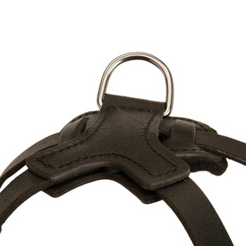 D-ring Attached to Belgian Malinois Harness
