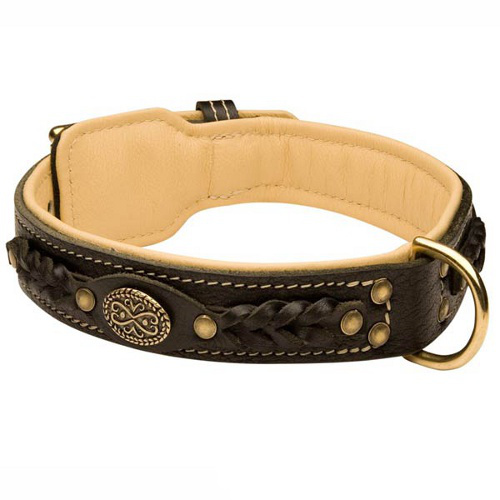 Belgian Malinois Leather Collar Braided